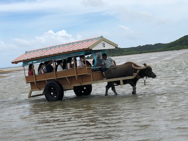 沖縄 由布島へ水牛に乗って
